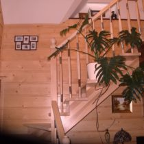 schody drewniane z miękkiego drewna